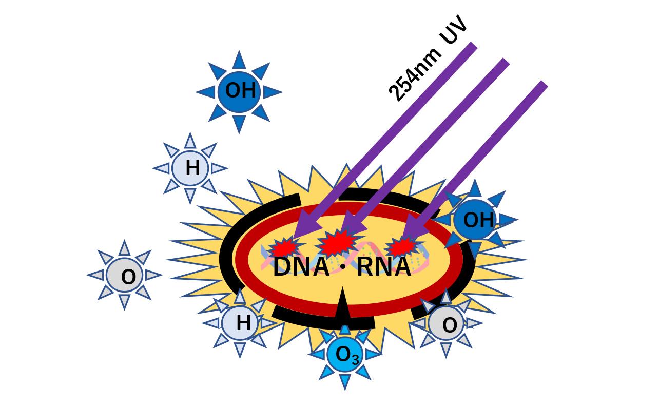 UV-C 254nm照射によるDNA・RNA直接損傷イメージ